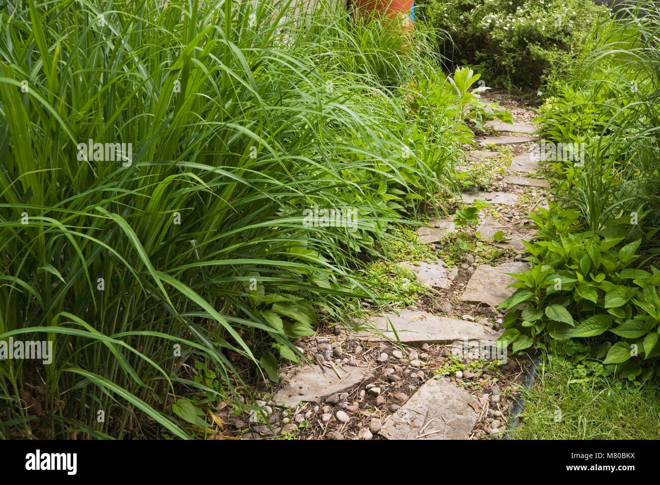 Flagstone path through borders with perennial plants leading to a terracotta rain collecting barrel for watering - Stock Image