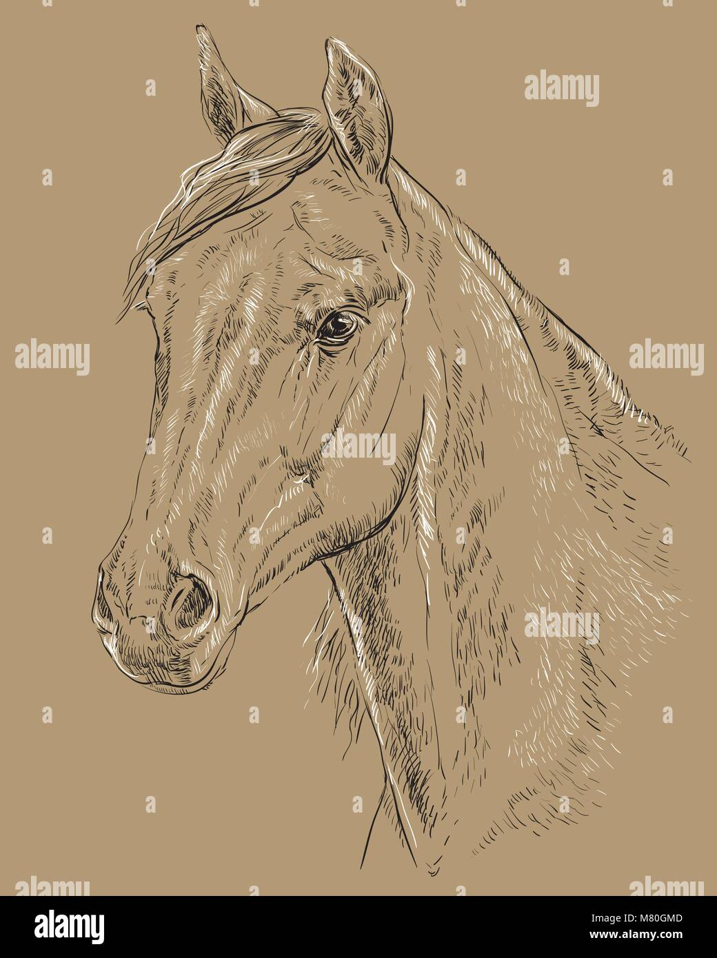 Arabian Horse Painting High Resolution Stock Photography And Images Alamy