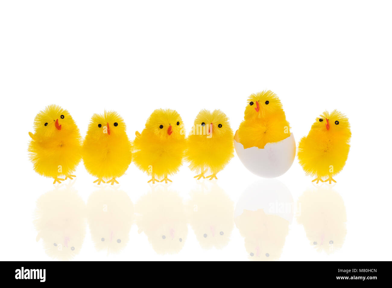 Six funny little yellow easter chickens on a row. One is still in the egg shell. The chickens are isolated on a - Stock Image