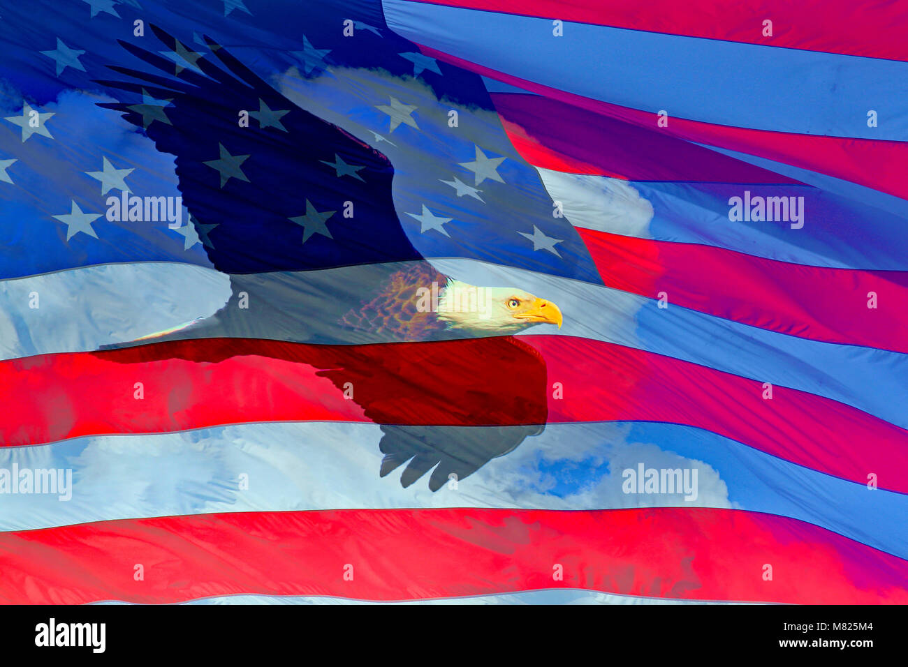 American Bald Eagle in flight and the Flag of the United States of America composite over clouds Stock Photo