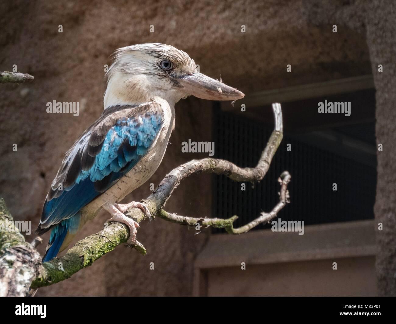 Australian bird Stock Photo