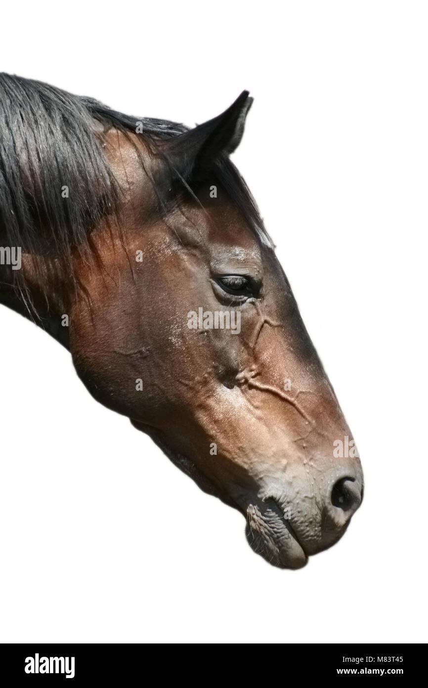 Horses head near a wire fence Stock Photo