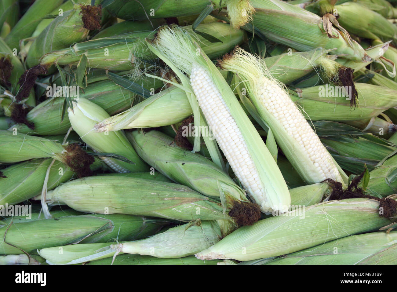 ears of Corn on the cob at the market - Stock Image