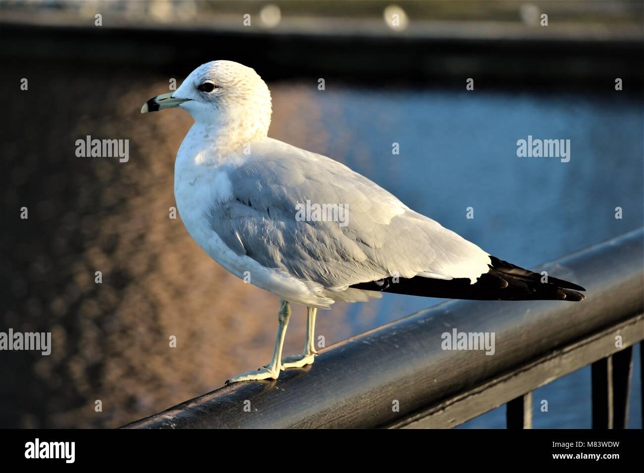 Keeping an eye on things - Stock Image