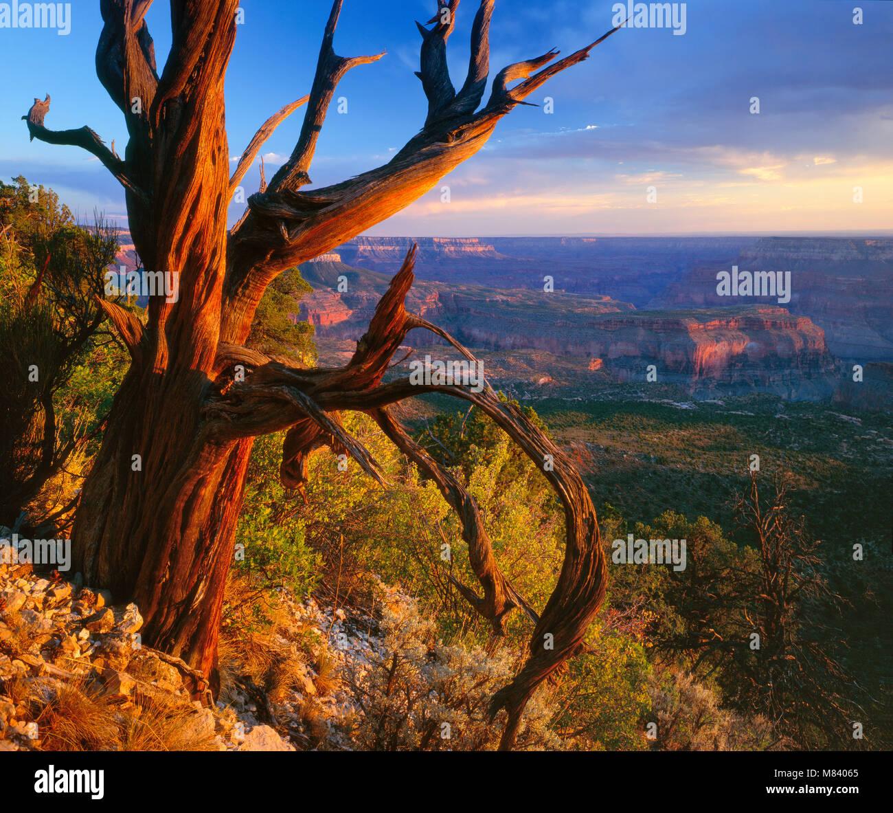 Crazy Jug Point, North Rim, Grand Canyon National Park, Arizona - Stock Image