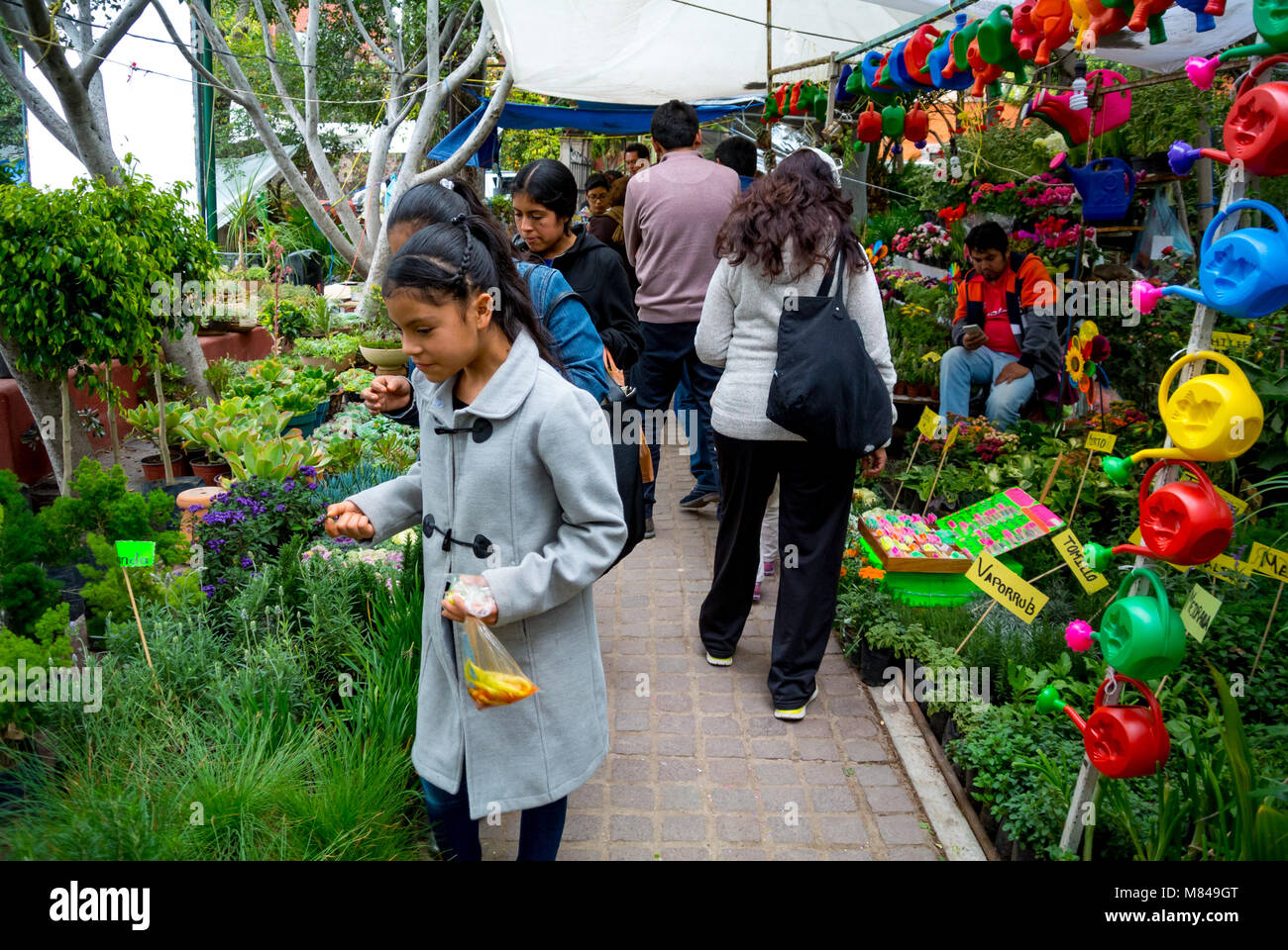 Local people buying plants at flower market, san miguel de allende, mexico - Stock Image