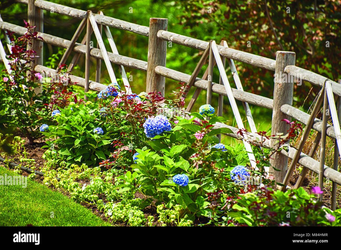 Very Pretty Flowers And Plants With A Wooden Fence To Contain The