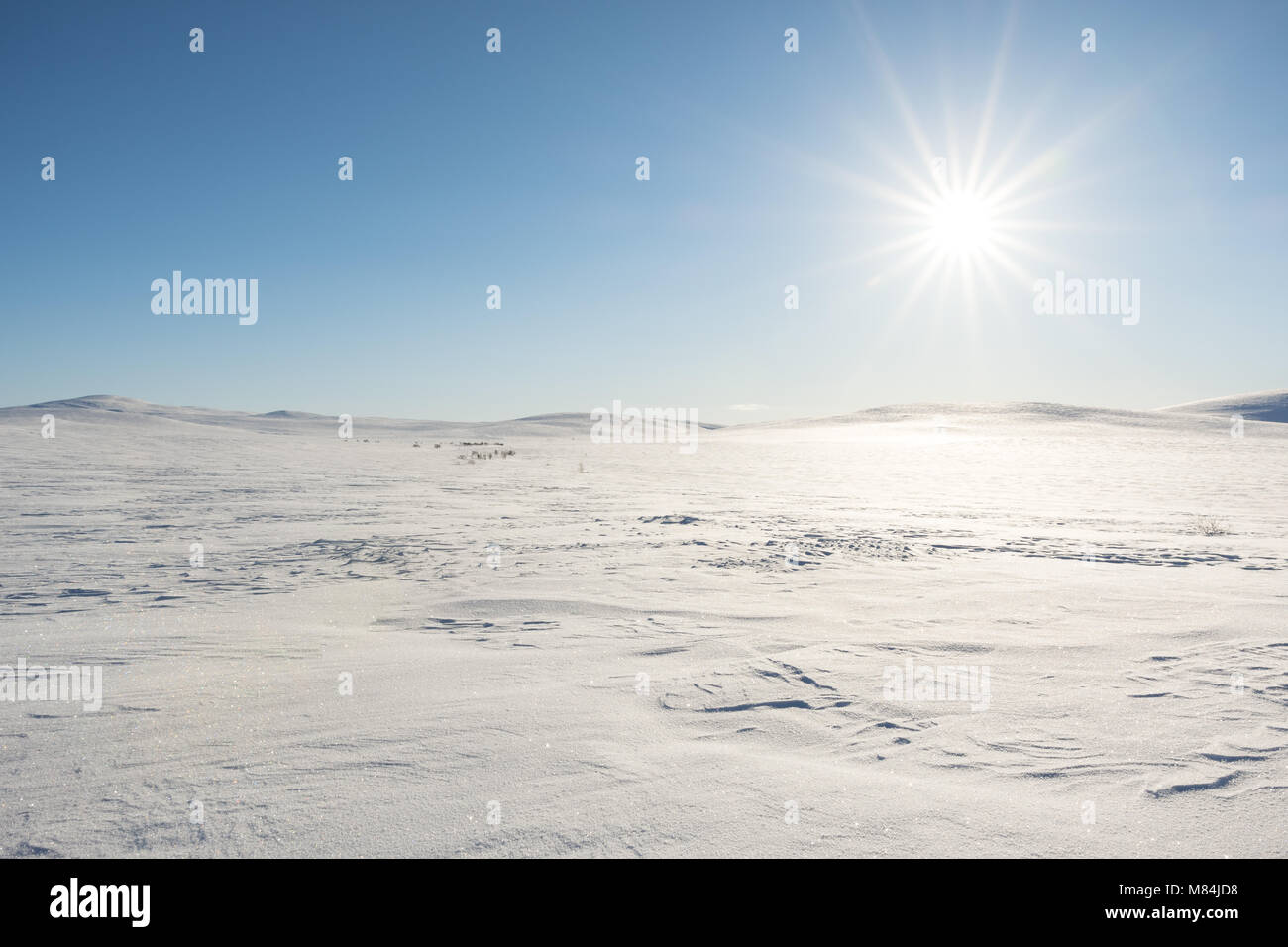 Sunny day at the flat mountain plateau Finnmarksvidda in Northern Norway, Finnmark. - Stock Image