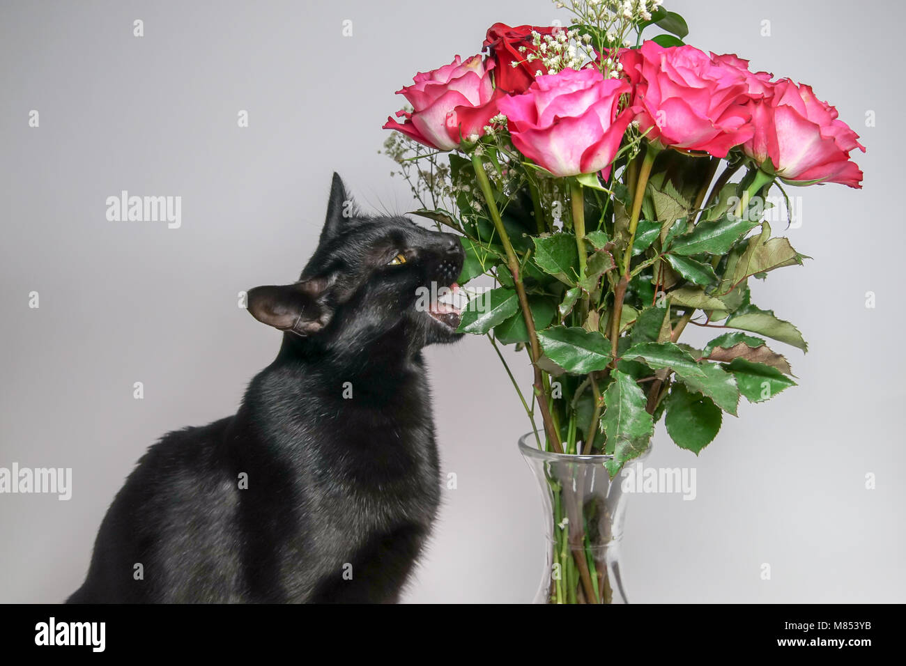 Mothers day cat flowers stock photo 177133807 alamy mothers day cat flowers mightylinksfo