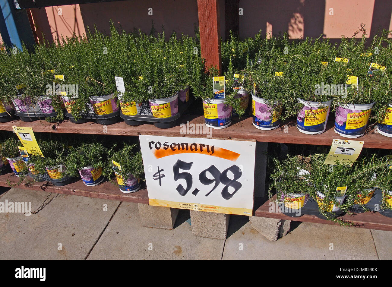 Pleasing The Home Depot Plants Stock Photos The Home Depot Plants Download Free Architecture Designs Jebrpmadebymaigaardcom
