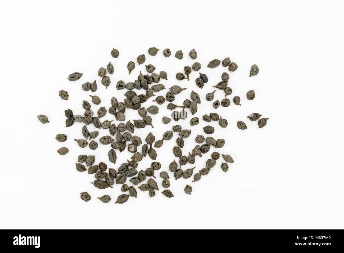 Dried Kair berries used as food ingredient (Capparis decidua) - Stock Image