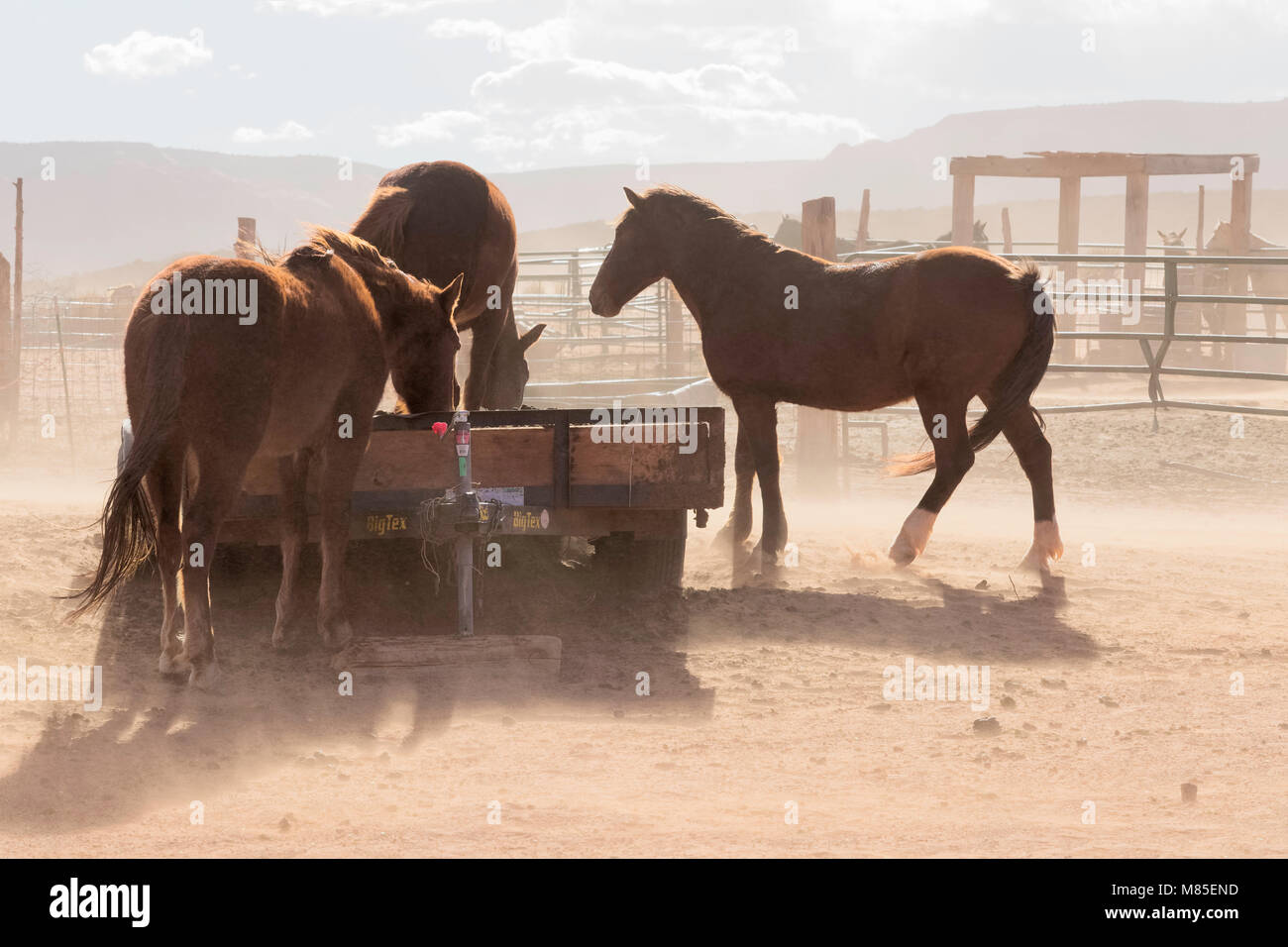 Horses on the Navajo Reservation, Monument Valley Tribal Park, Arizona - Stock Image