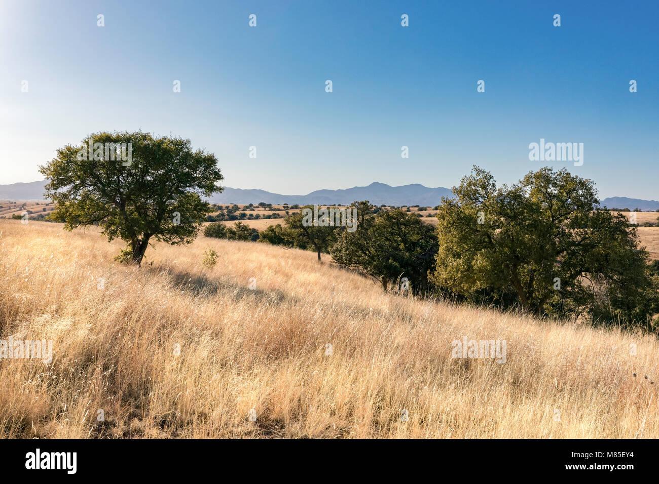 Winter landscape, Southeastern Arizona, backroads of Cochise County - Stock Image