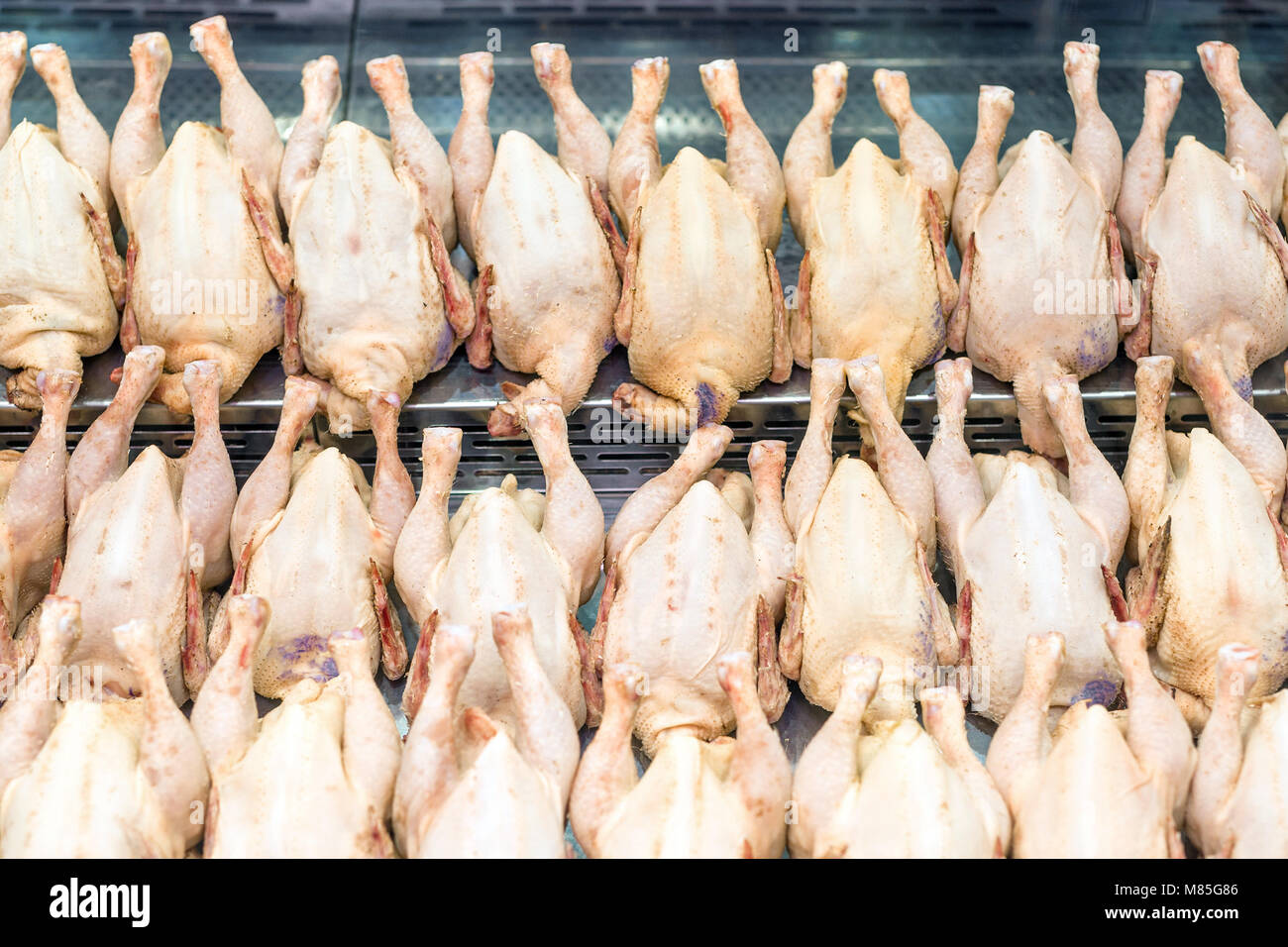 Rows of fresh raw chicken poultry at supermarket window-display. Poultry farm indystry. Livestock industry price - Stock Image