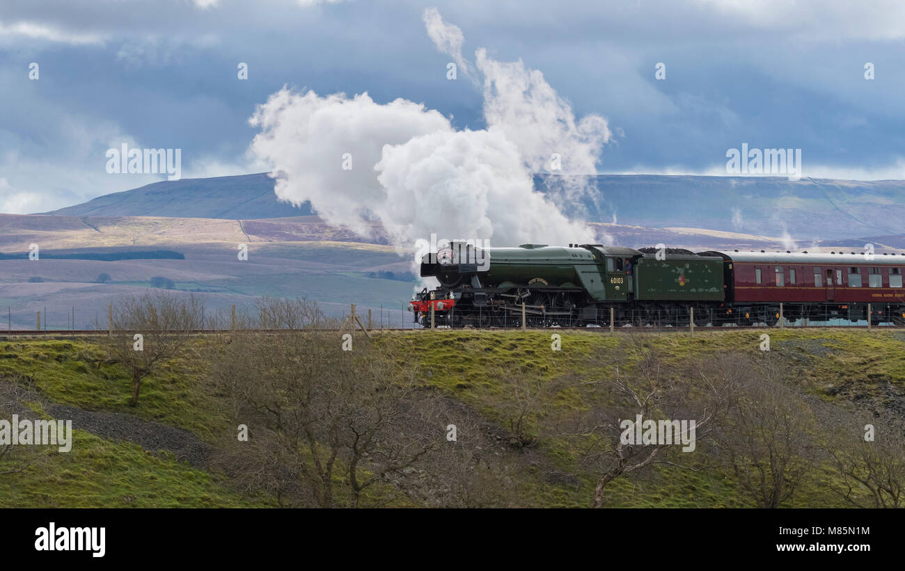 Puffing steam cloud, iconic locomotive LNER class A3 60103 Flying Scotsman travels in scenic countryside - Ribblehead, - Stock Image