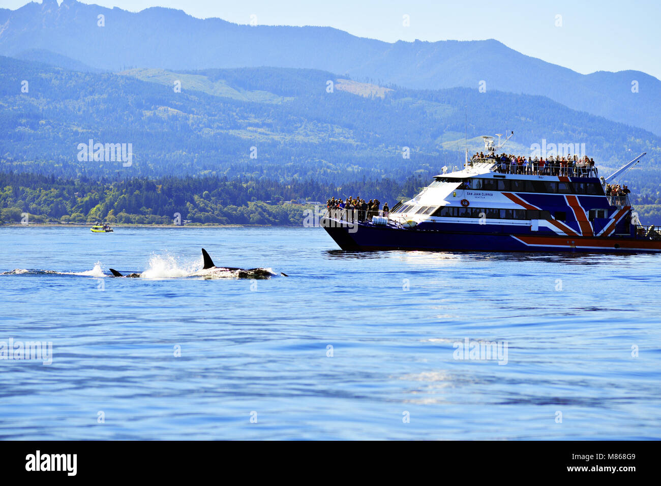 Whale watching off the coast of Canada - Stock Image
