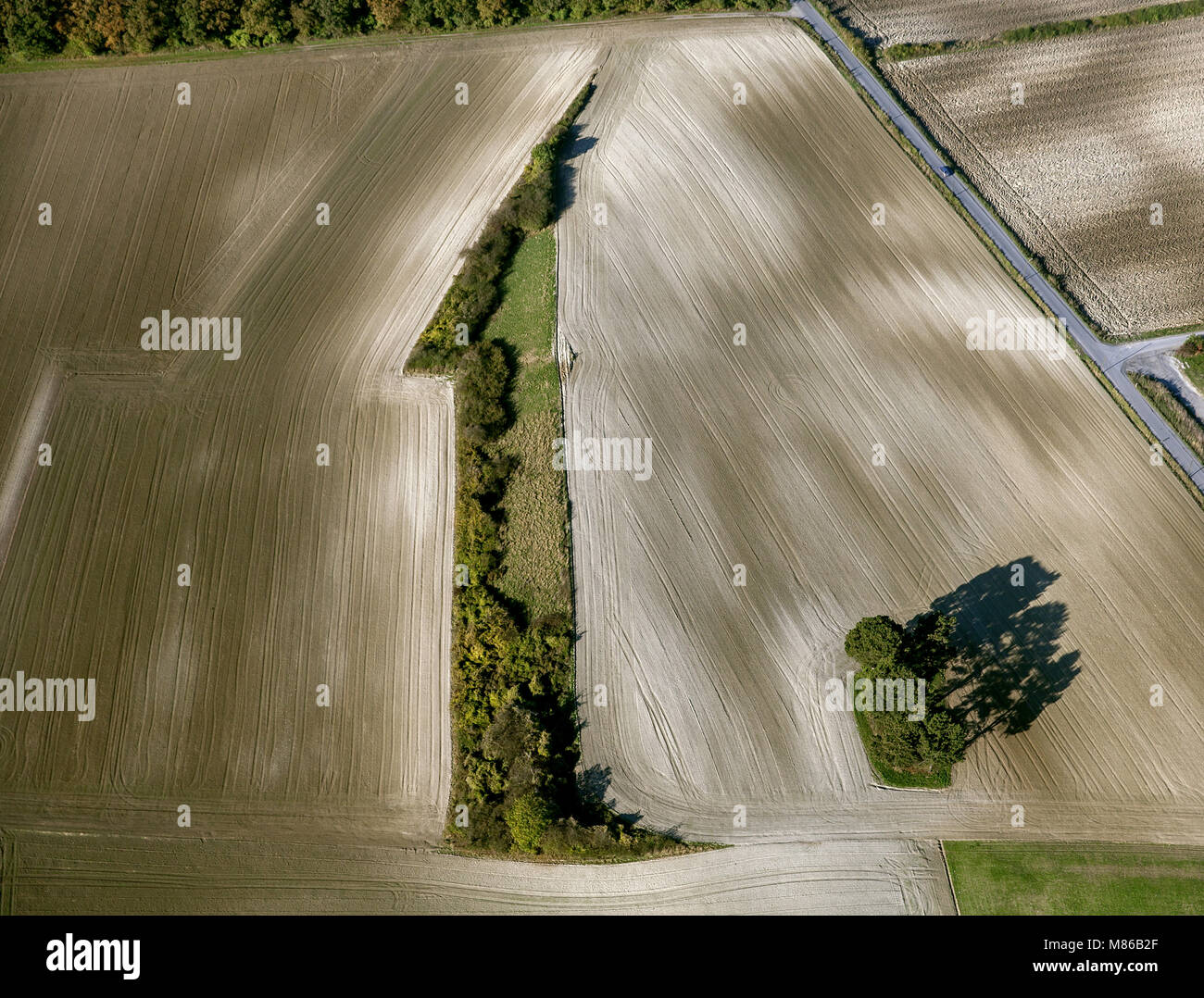 Aerial view, hedgerows a one. Wall hedge in the form of a one 1, the Aufnhame was countered, Hamm, Ruhr area, North - Stock Image