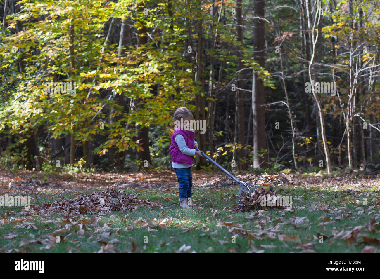 Toddler girl learning to rake leaves on a cool autumn day in Maine - Stock Image