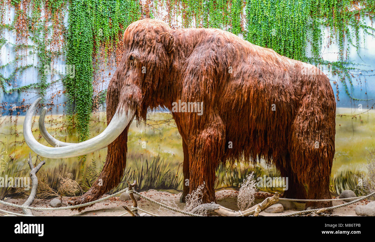 Mammoth as exposure - Stock Image