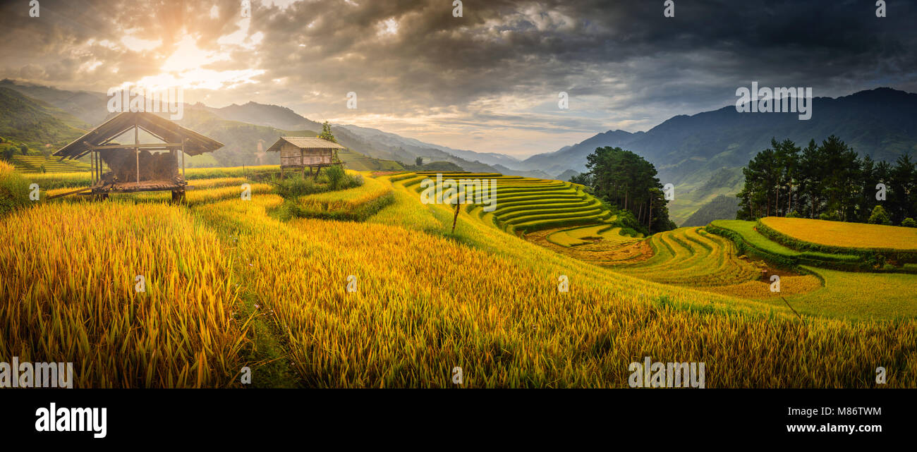 Rice fields on terraced with wooden pavilion at the morning in YenBai, Vietnam. - Stock Image