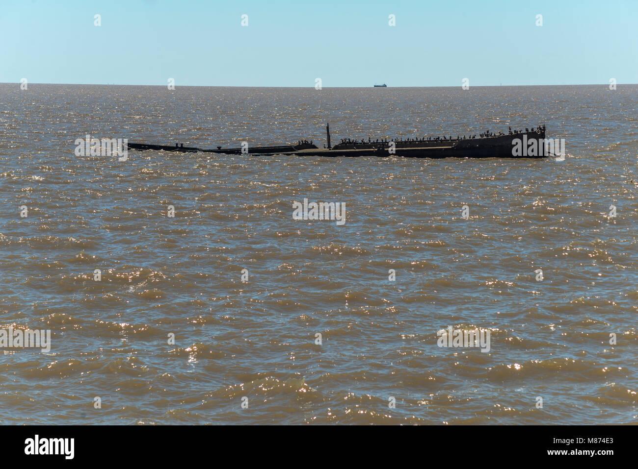 shipwreck in the Rio de la Plata, sunken ship with many birds on deck - Stock Image