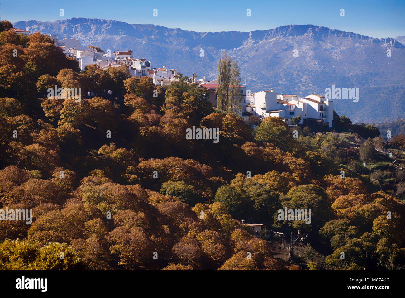 Pujerra, Malaga Province, Spain.  Autumn in the chestnut forests of the Valle del Genal in the Serranía de - Stock Image