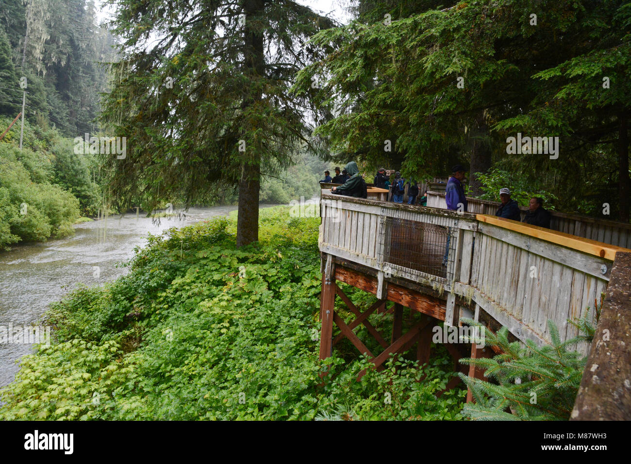Tourists on the bear viewing platform at the Fish Creek Wildlife Observation Site, in the Tongass National Forest, - Stock Image