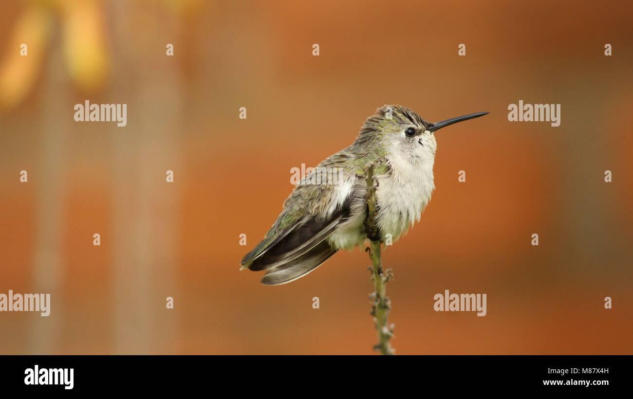 Bird in Arizona - Stock Image