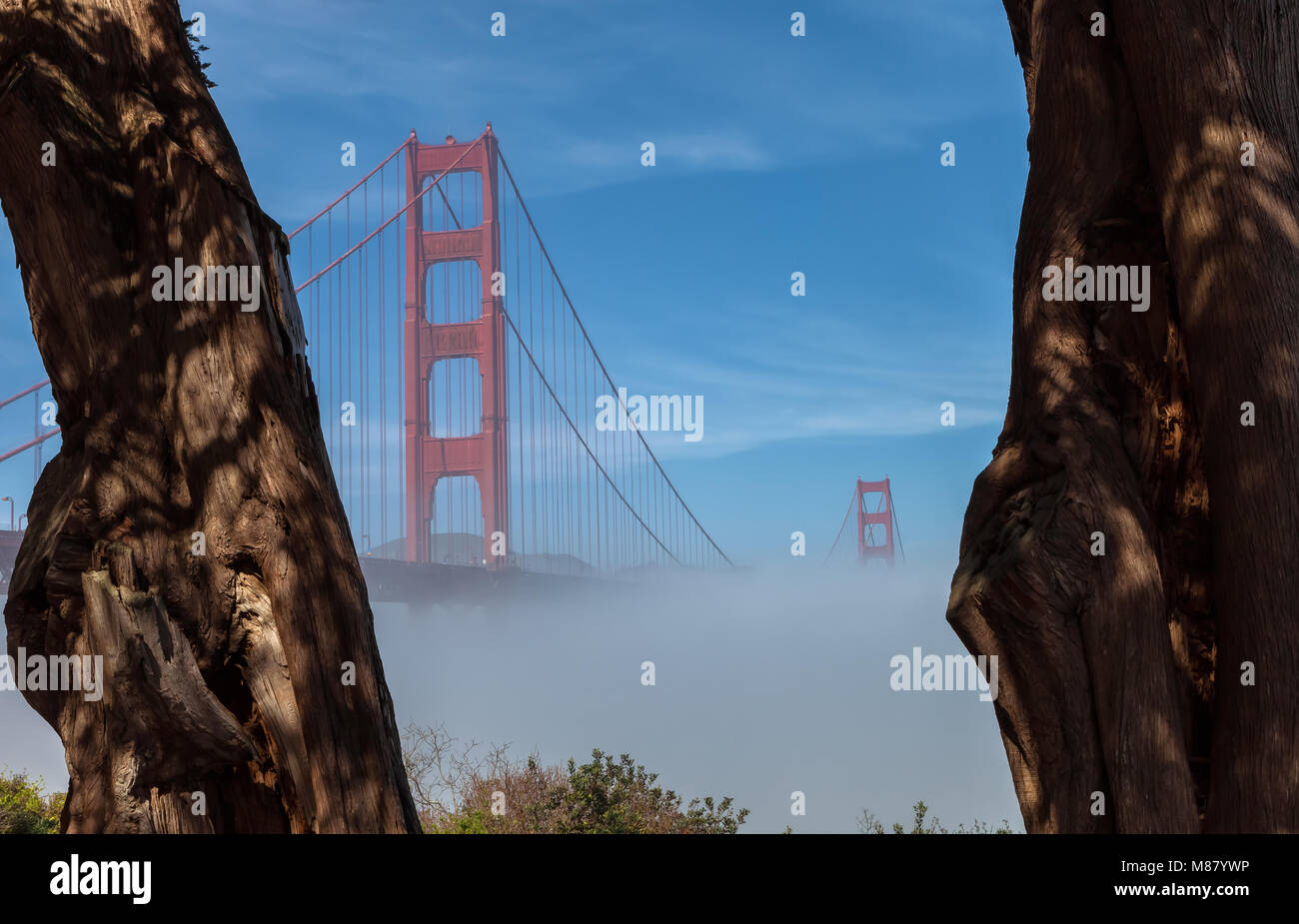 Thick low fog formed under the Golden Gate Bridge in San Francisco, California, United States, on an early spring - Stock Image