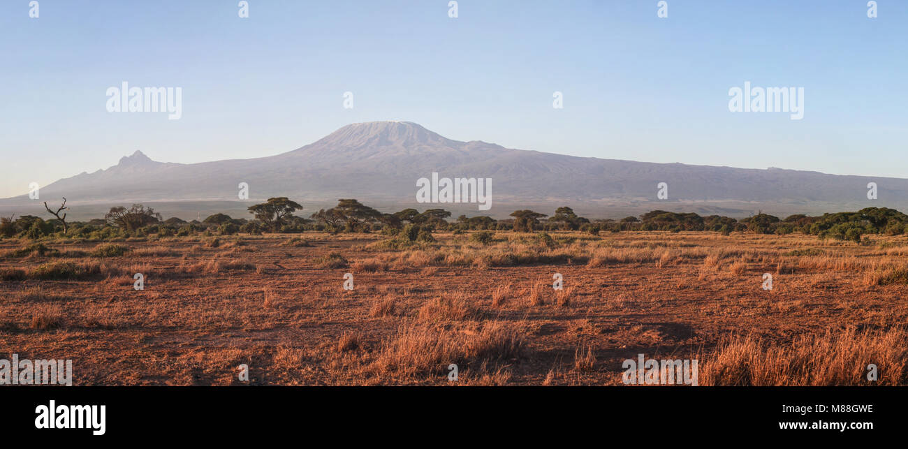 Amboseli national park panorama with mount Kilimanjaro in the background in morning light. - Stock Image