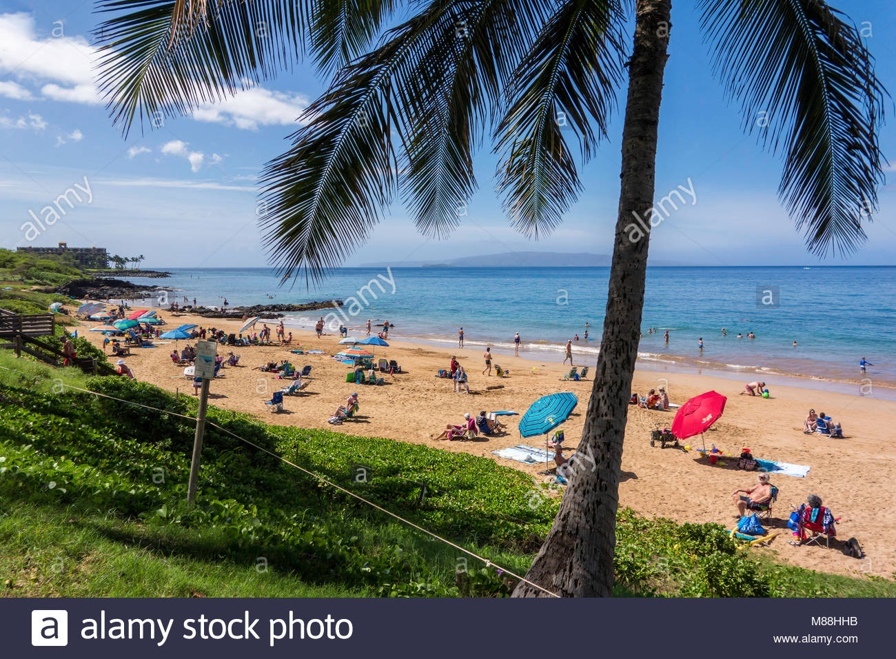 Palm tree and people on Kamaole Beach Park 3 in Kihei on the island of Maui in the state of Hawaii USA - Stock Image