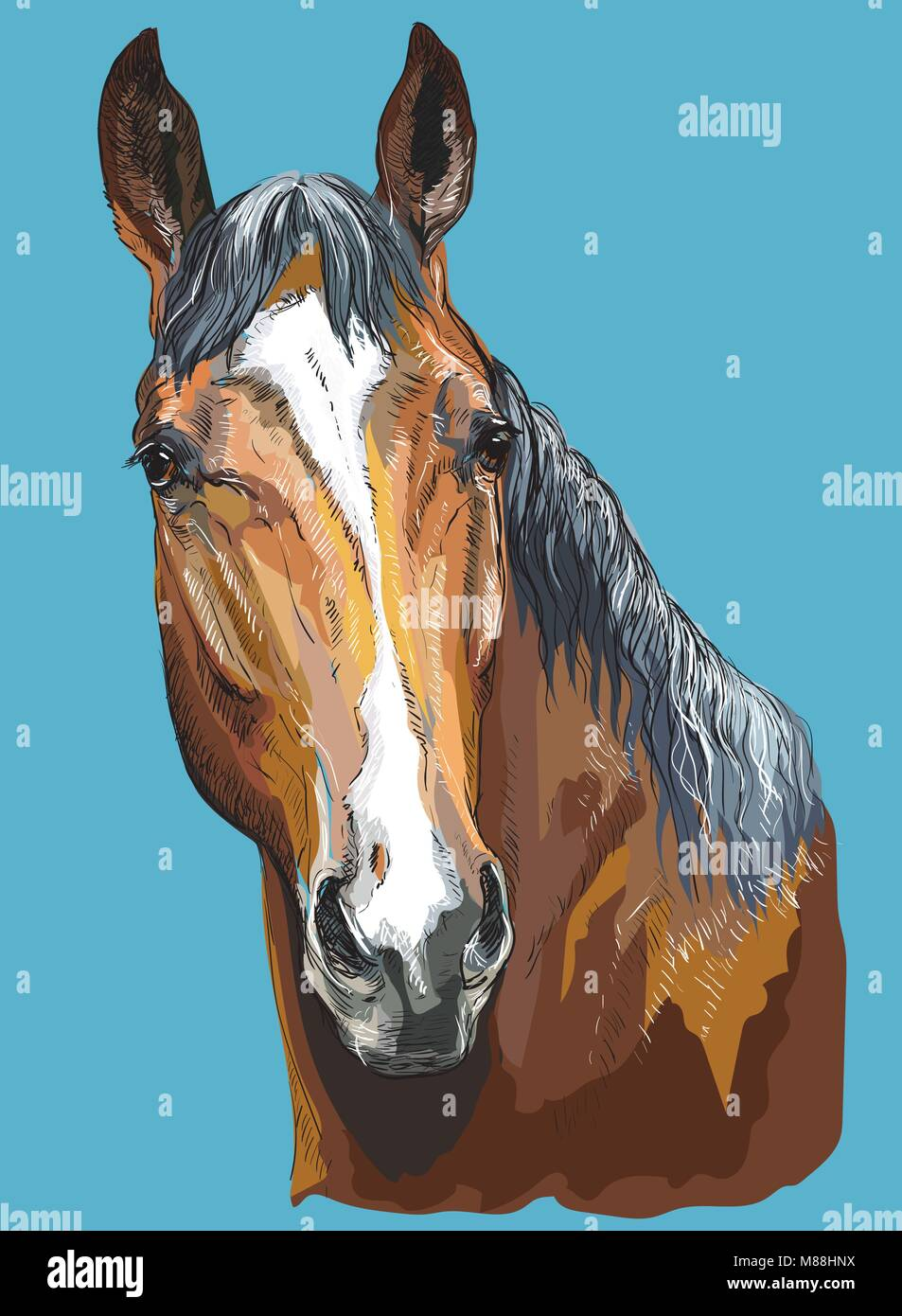Colorful portrait of Trakehner horse. Horse head- isolated vector hand drawing  illustration on blue background - Stock Vector