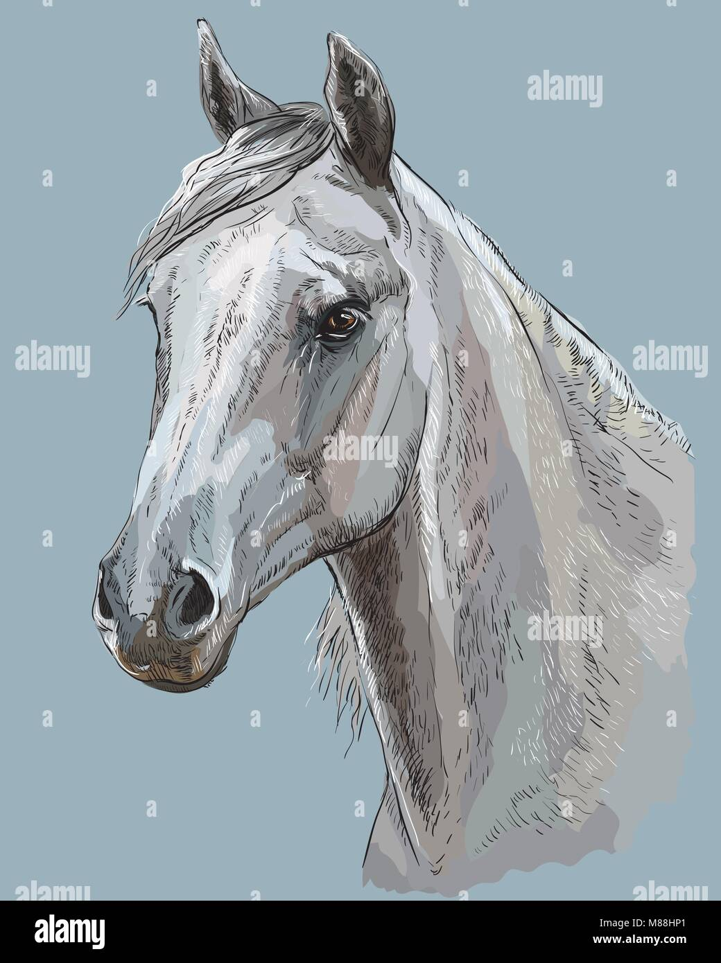 Page 2 White Horse Head Painting High Resolution Stock Photography And Images Alamy