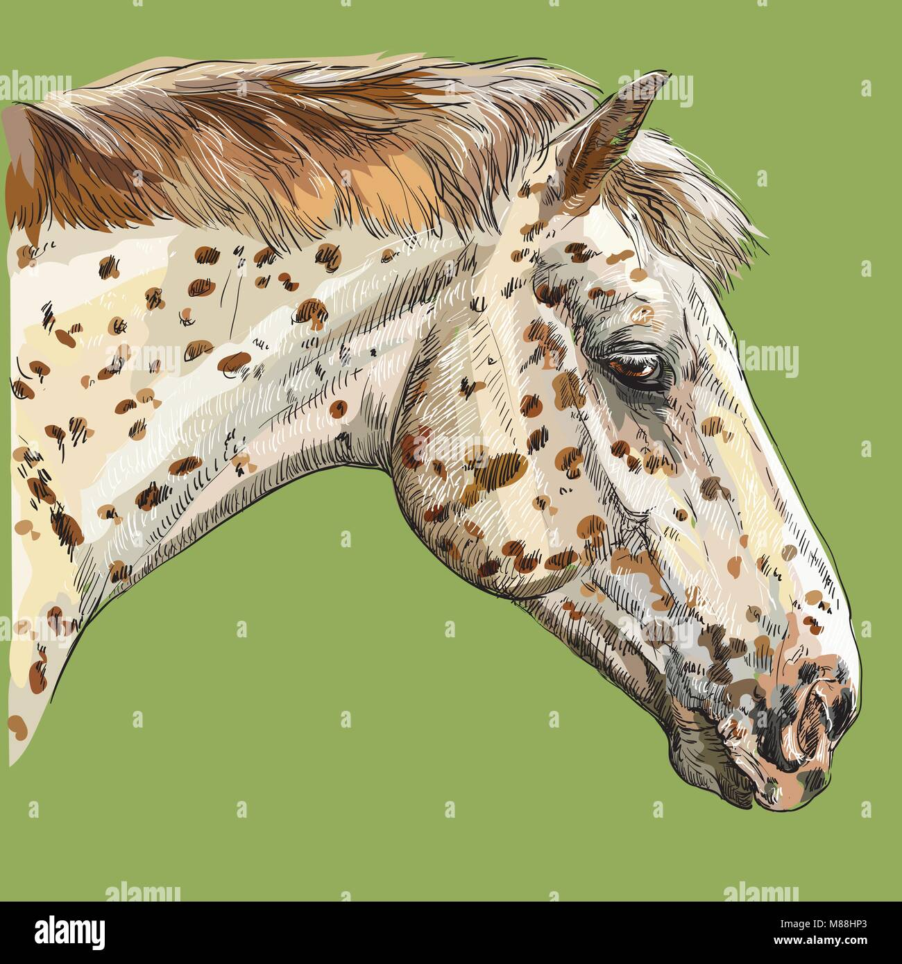 Colorful Portrait Of Appaloosa Horse Horse S Spotted Head In Profile Stock Vector Image Art Alamy