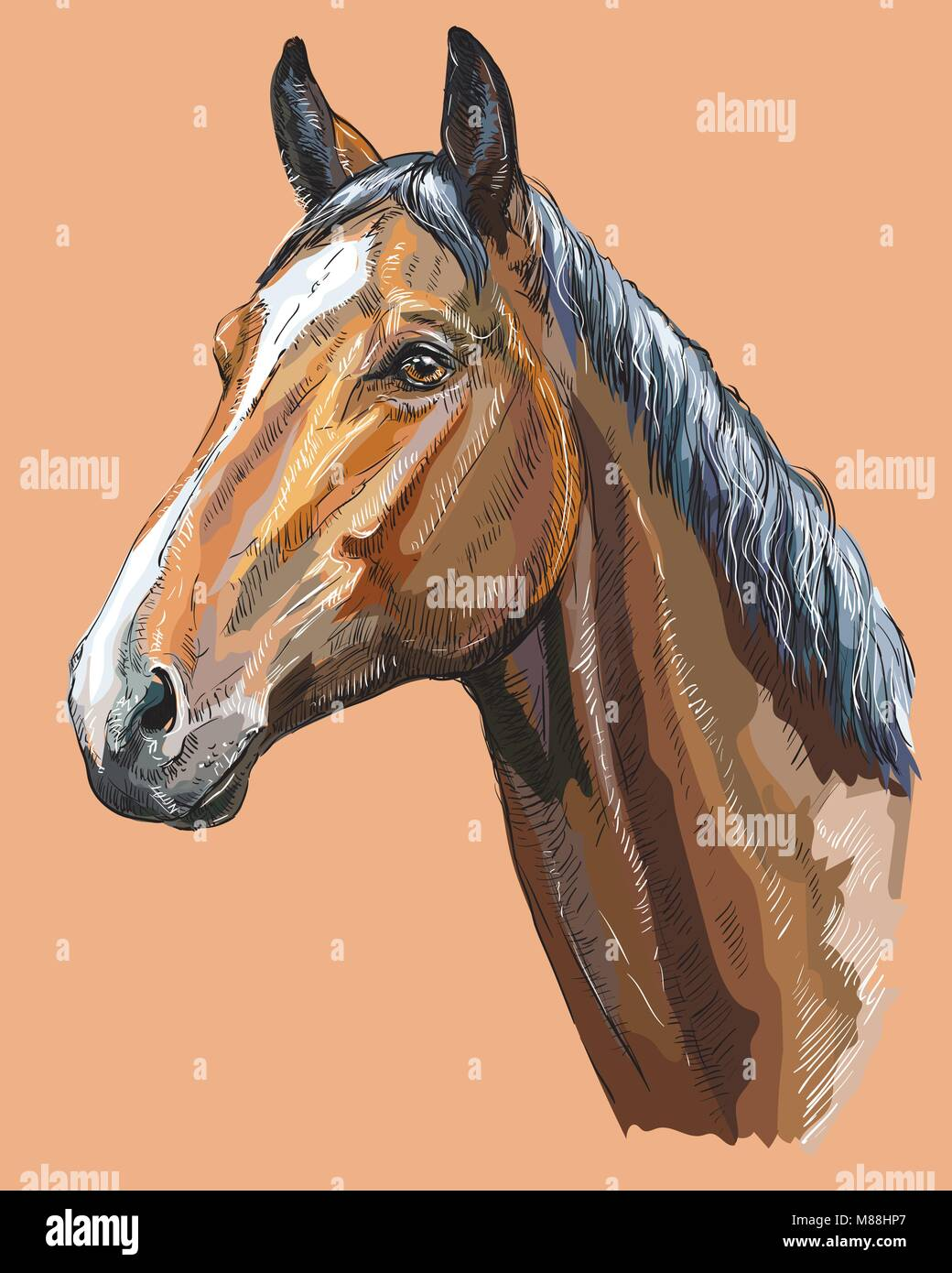 Colorful portrait of Trakehner horse. Horse head  in profile isolated vector hand drawing illustration on beige - Stock Vector