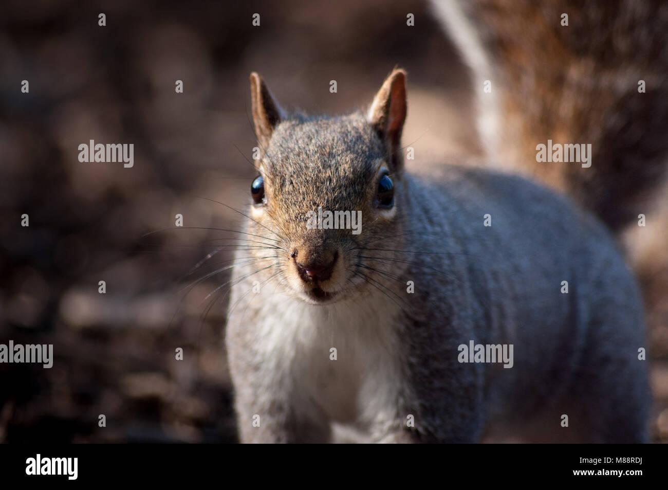 Squirrel Portrait - Stock Image