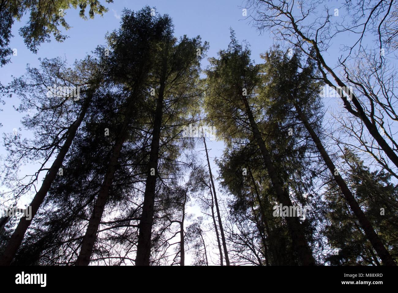 Forest on Greeto Bridge Trailhead in Largs, North Ayrshire, Scotland - Stock Image