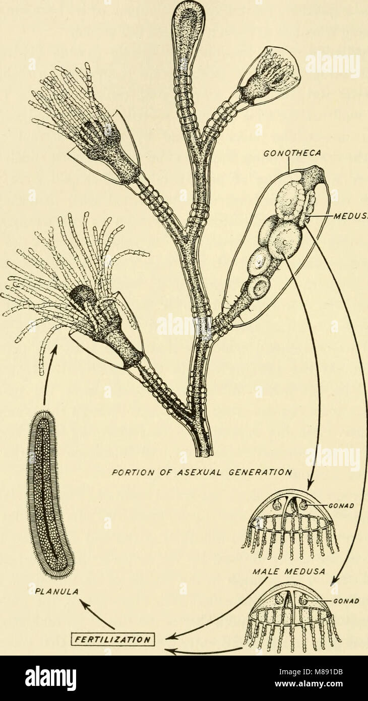 Elements of biology, with special reference to their rôle in the lives of animals (1933) (21230103582) Stock Photo
