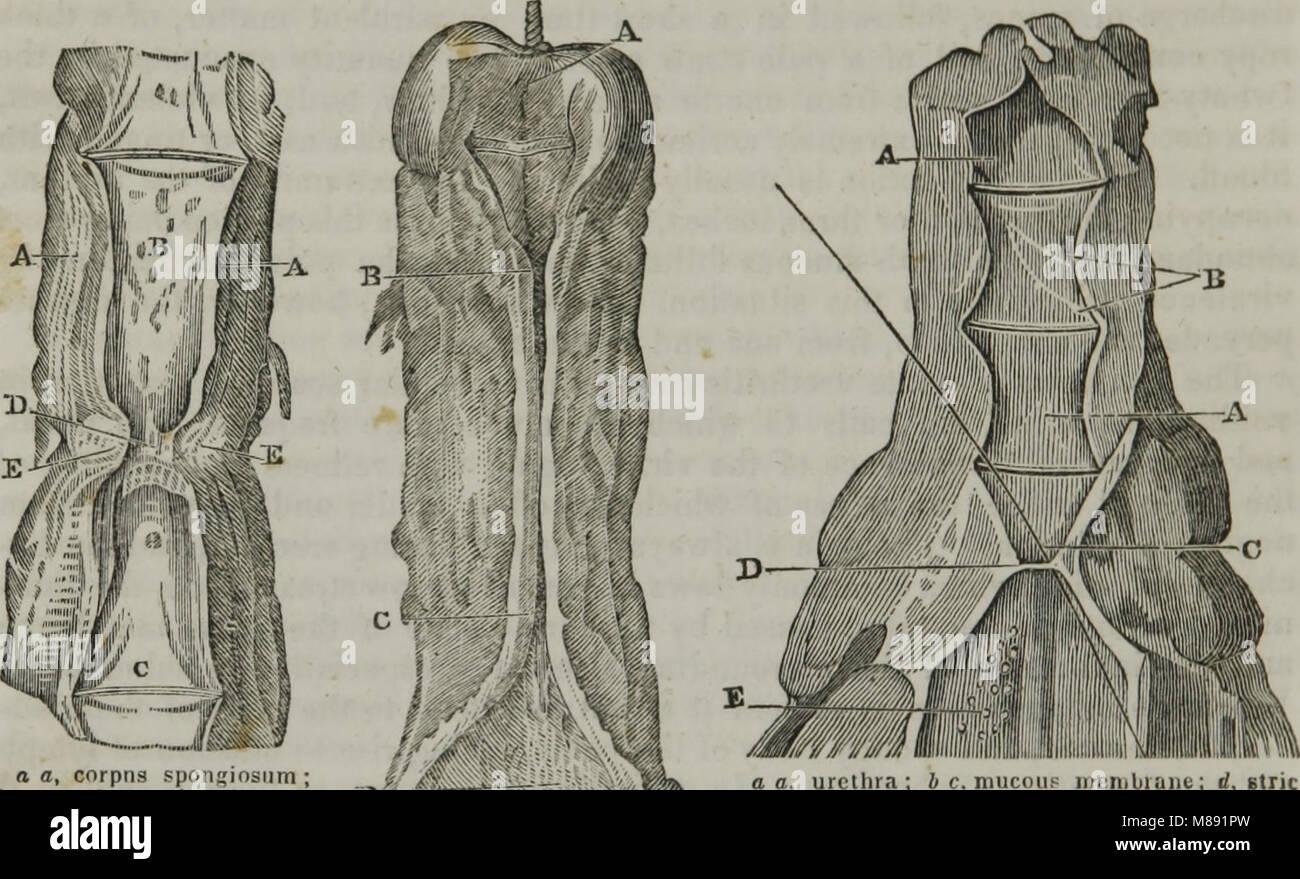 Elements of pathological anatomy (1845) (14596295200) - Stock Image