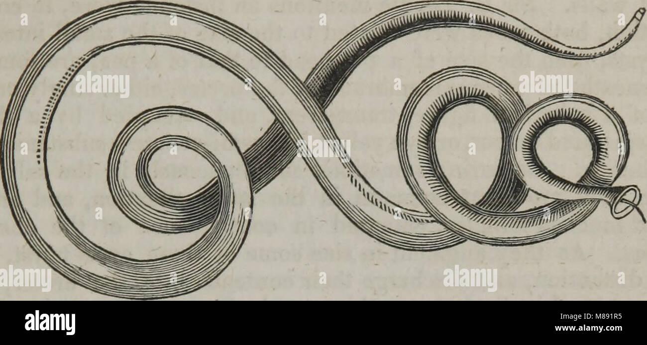 Elements of pathological anatomy (1845) (14802844503) - Stock Image