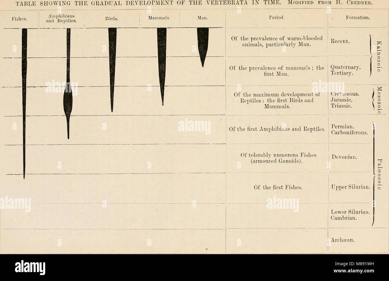 Elements Comparative Anatomy Vertebrates 1886 Stock Photos