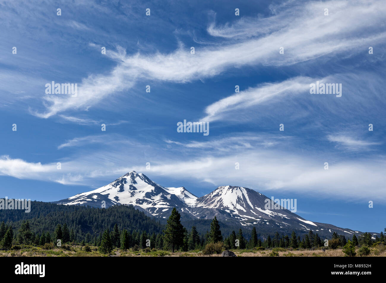 CA02862-00...CALIFORNIA - Mount Shasta viewed form Bolam Road in the Mount Shasta National Forest. - Stock Image