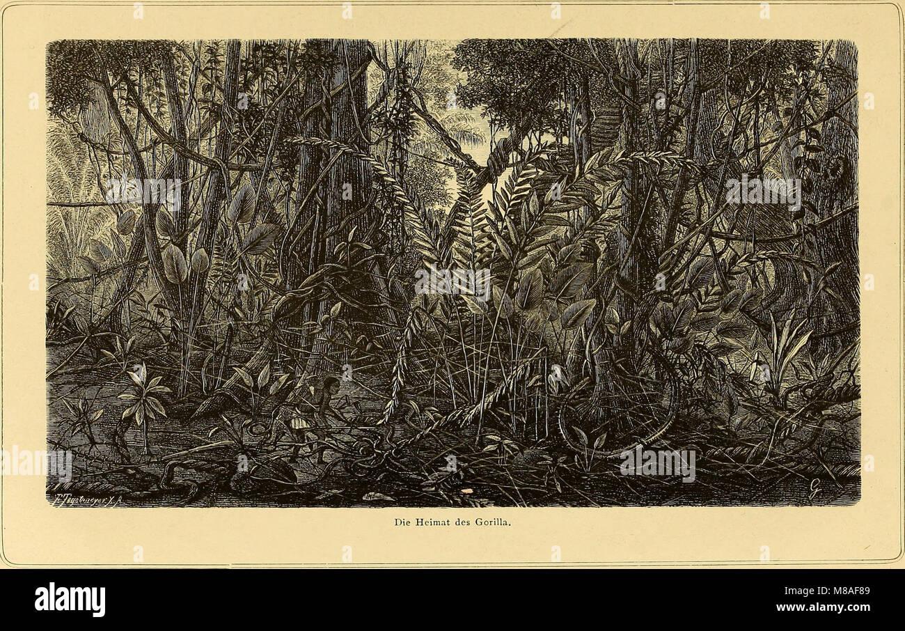 Die Loango-Expedition ausgesandt von der Deutschen Gesellschaft zur Erforschung Aequatorial-Africas, 1873-1876 - ein Reisewerk in drei Abtheilungen (1879) (20309744994) Stock Photo