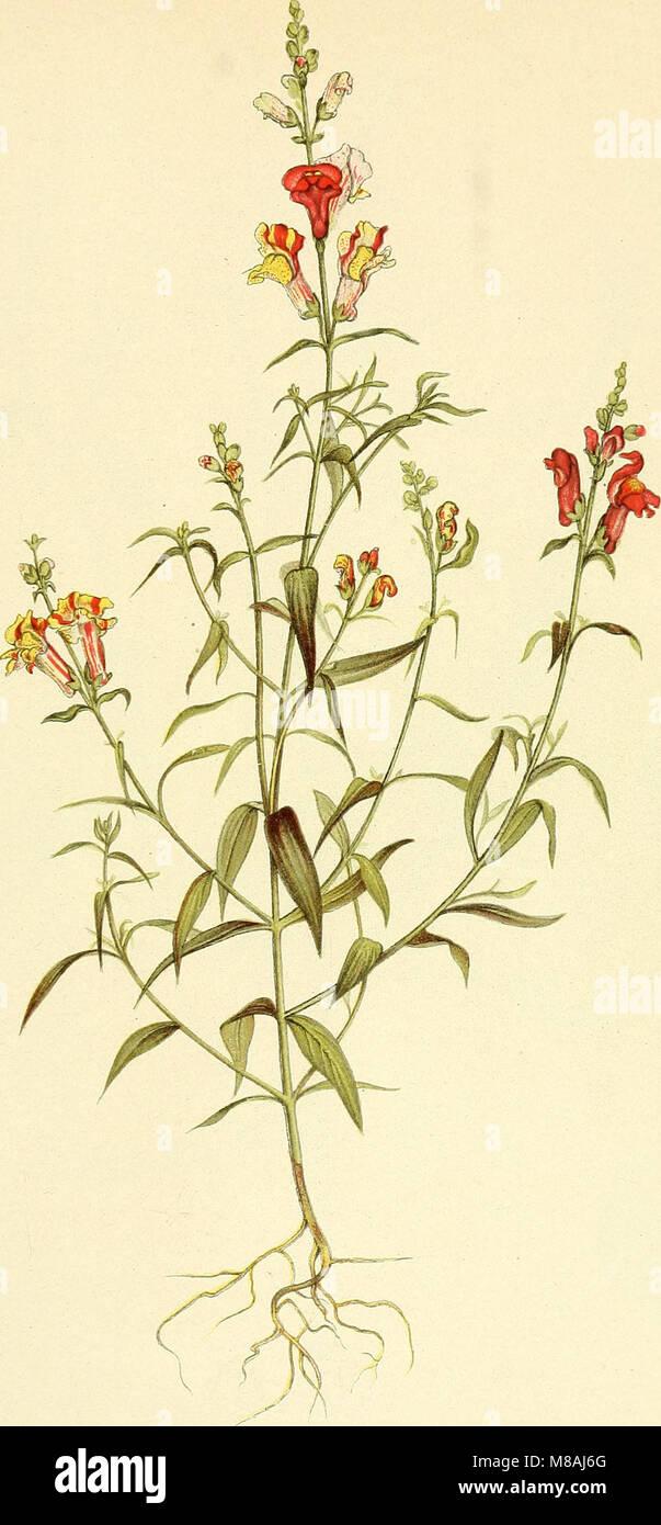 Die mutationstheorie. Versuche und beobachtungen über die entstehung von arten im pflanzenreich (1901) (20934099805) - Stock Image