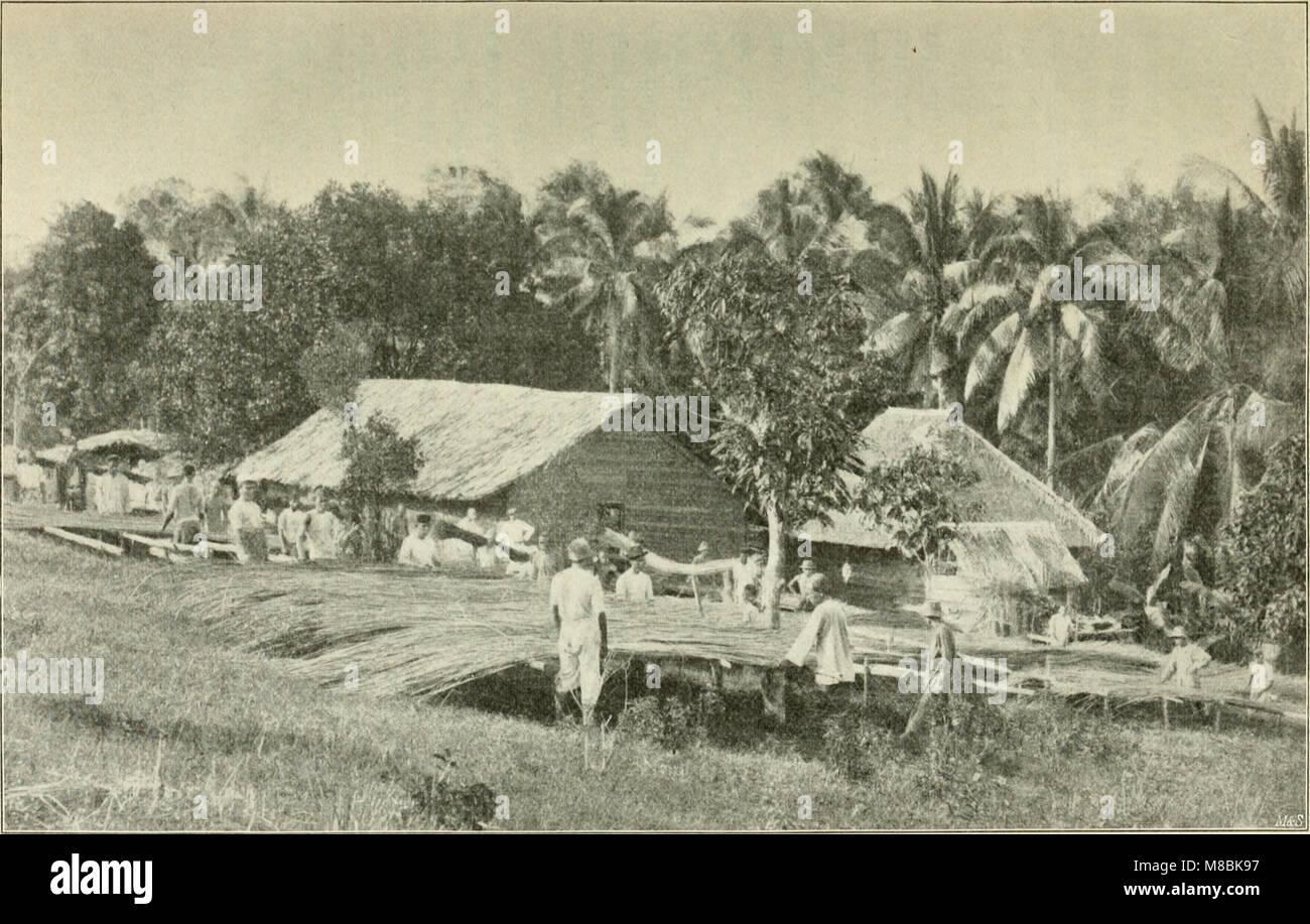 Der Tropenpflanzer; zeitschrift fr tropische landwirtschaft (20676328950) Stock Photo