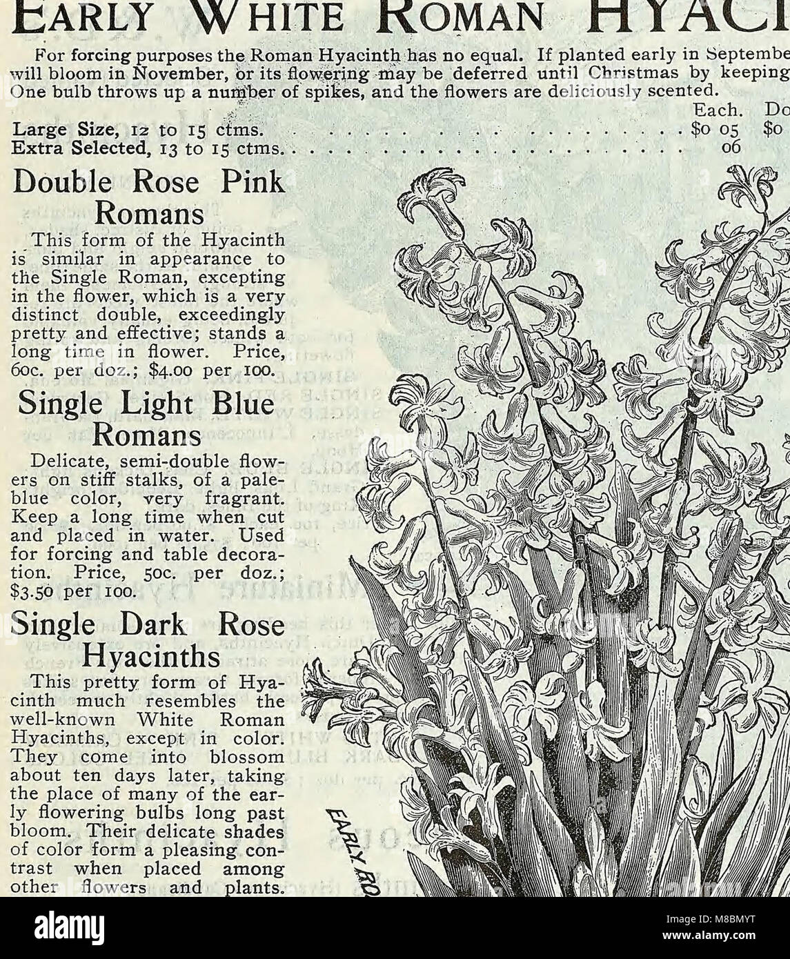 Descriptive Catalogue Vegetable Flower Farm Stock Photos