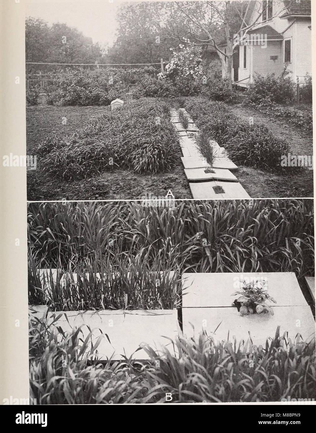 Development and activities of roots of crop plants; a study in crop ecology (1922) (20268095554) Stock Photo