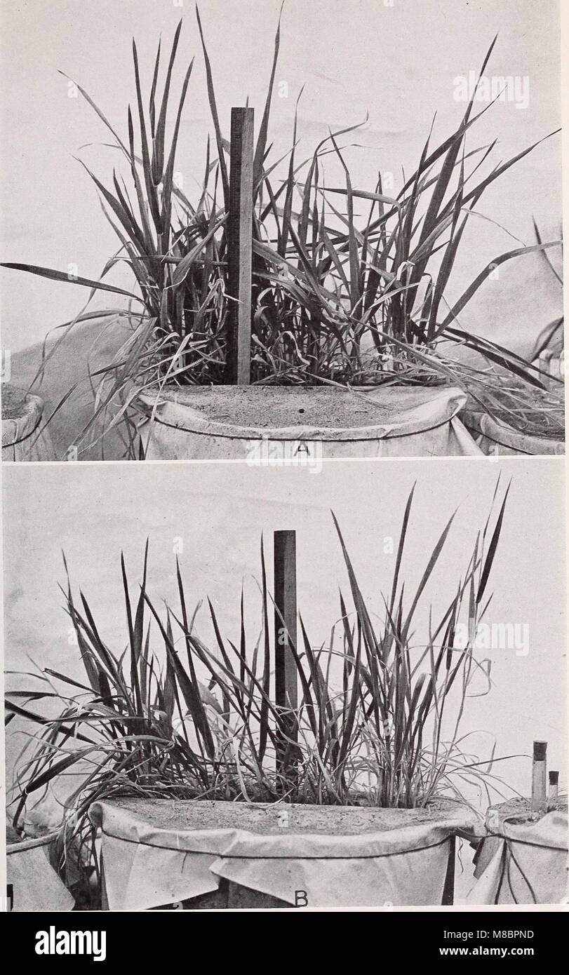 Development and activities of roots of crop plants; a study in crop ecology (1922) (20269669173) Stock Photo