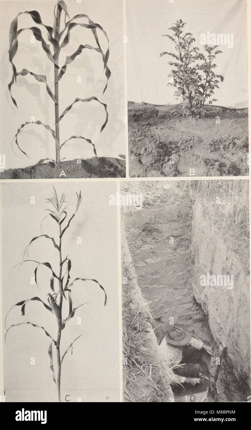 Development and activities of roots of crop plants; a study in crop ecology (1922) (20880991682) Stock Photo