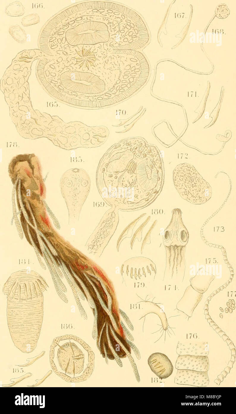 Diseases and enemies of poultry (1897) (14564920258) - Stock Image